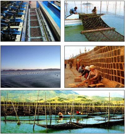 広川の海苔養殖風景