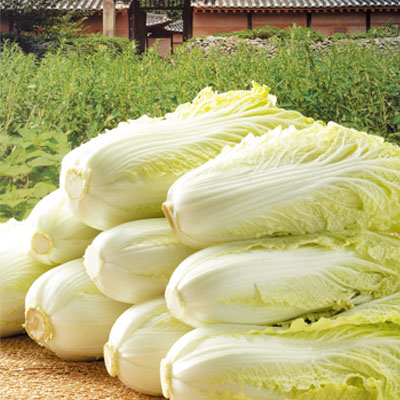 契約農家が季節ごとに栽培地を替えて有機農法で栽培した厳選野菜