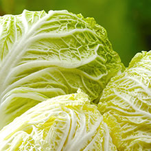 ハンウルの白菜